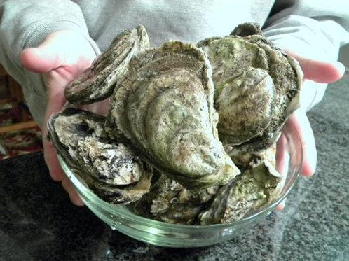 牡蠣 Oysters in Shell (10-11 pcs)