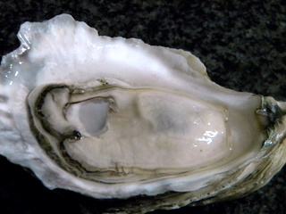Local Oyster