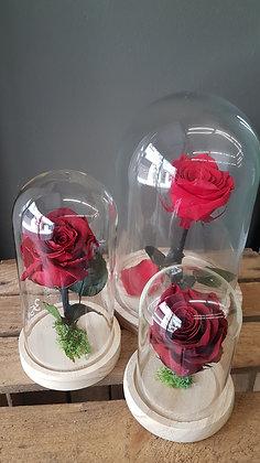 Cloche rose eternelle