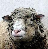 ile de france ovce