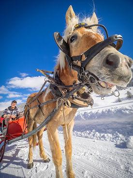 Esperienza a cavallo sulla neve
