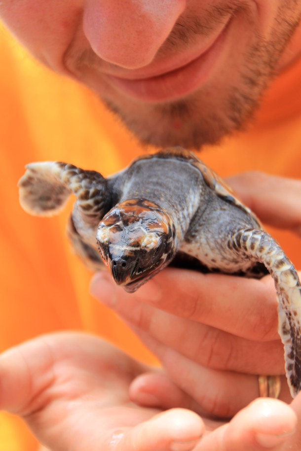 Releasing sea turtles from conservation center in the Philippines