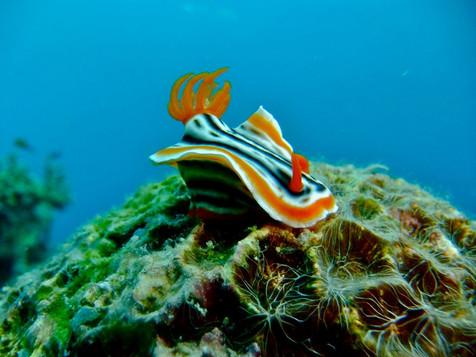 Nudibranch in Sogod Bay