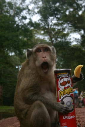 Monkey stole my chips in Cambodia