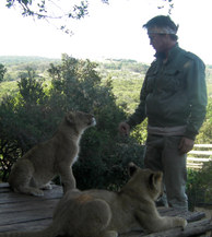 Volunteering as lion cub caretaker in South Africa