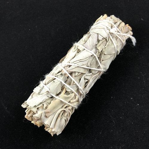 """White Sage, 4"""" UNpackaged"""