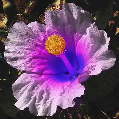 A Flower Partout.png