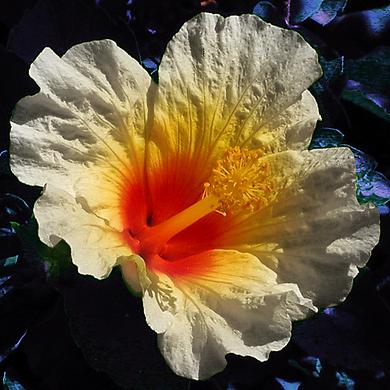 A Part Tonal flower.png