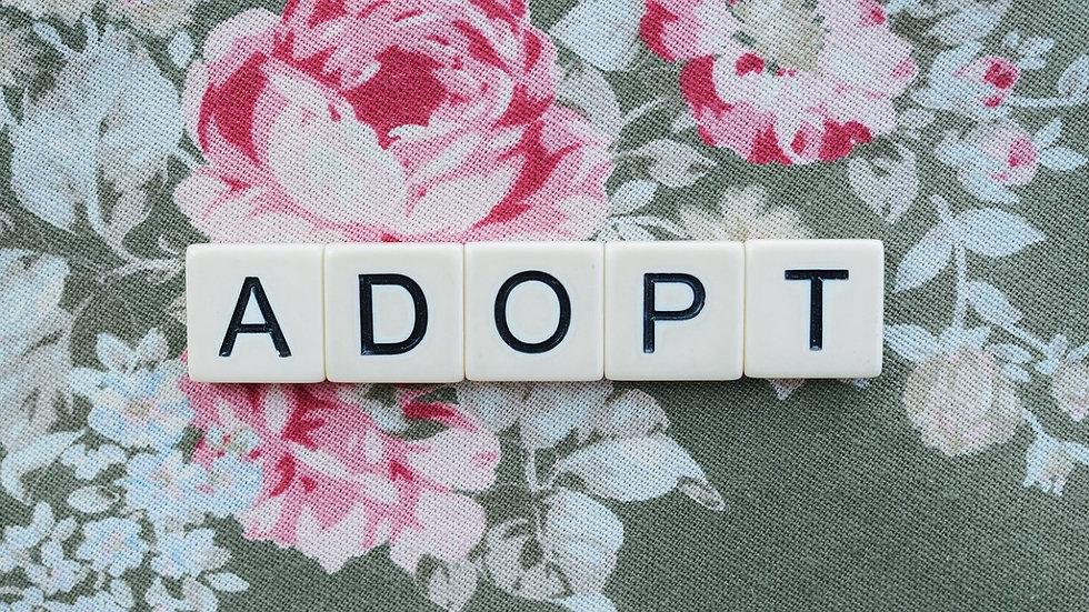 adopt_edited.jpg