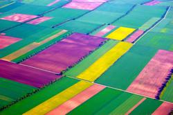 Holland Fields.jpg