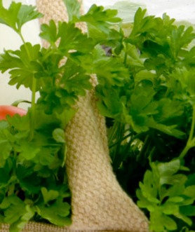 Coriander Herb -  Bunch or Bag