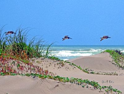 Pelican Dunes