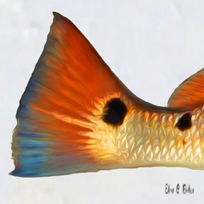 Red Fish 2 Spots
