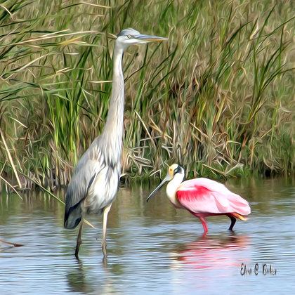 Great Blue Heron - Roseate Spoonbill