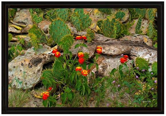 """Prickly Pear Cactus and Friends"""