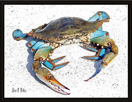 """""""Old Crab"""""""