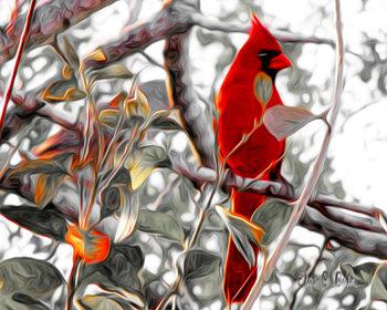 Sunrise Cardinal