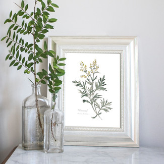 New Wild Herb Botanical Prints