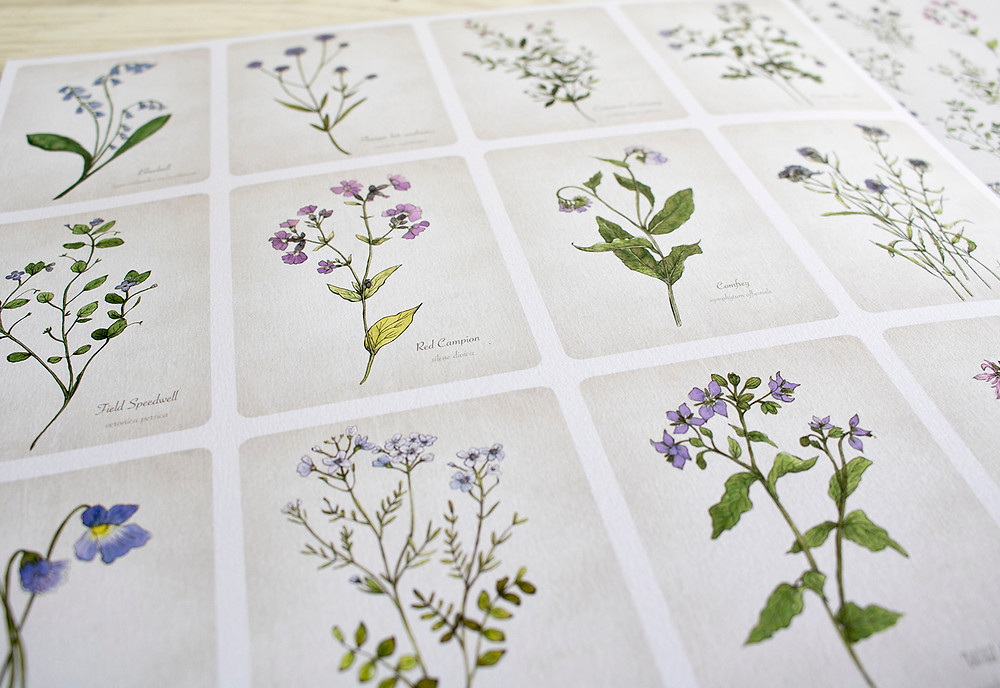 Blue Wildflowers Botanical Cards
