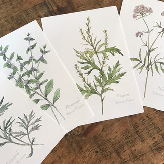 Winter Sale 20% off everything in my Botanical print shop. Plus your chance to win 20 of my botanica