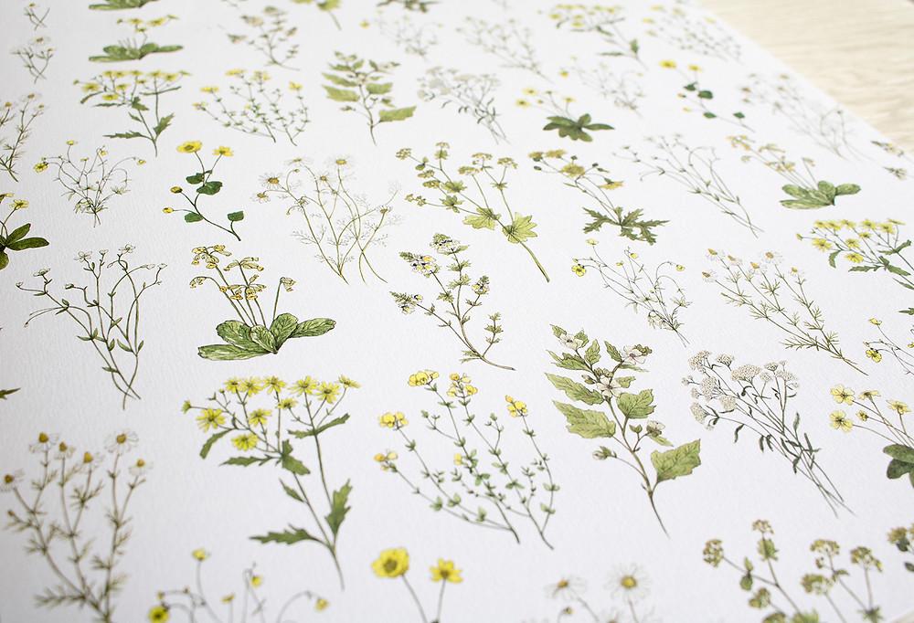 Yellow Wildflowers Pattern