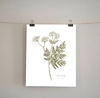 Hackney & Co new Botanical prints added to the shop