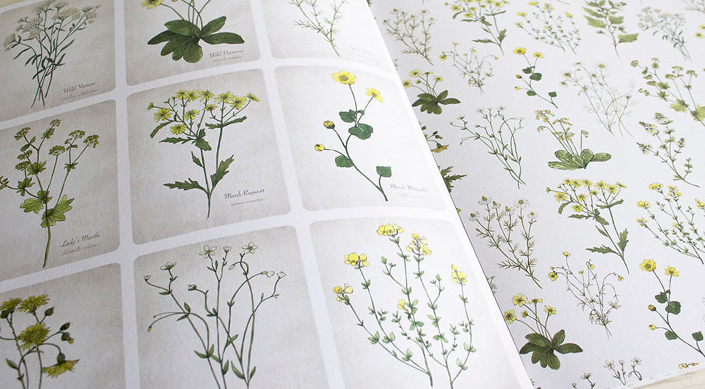 Yellow Wildflowers Botanical Cards