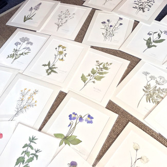 My Orkney Botanical Series prints are now available in local shops
