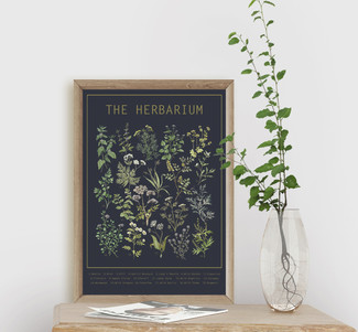 Wildflowers of Scotland & The Herbarium Posters now available in my Etsy Shop