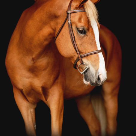 GETTING YOUR HORSE PHOTOSHOOT READY WITH PRO EQUINE GROOM KRISTEN ABANO