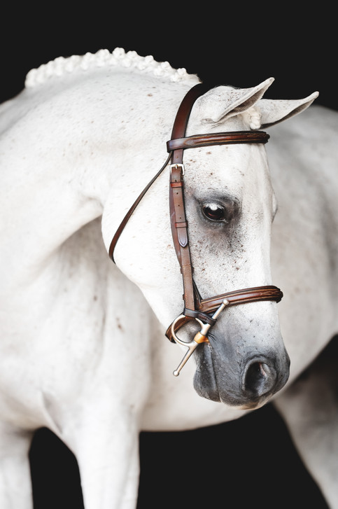 White pony with braids