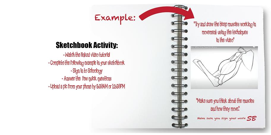 Sketchbook.S1.bicep.muscles-01.png