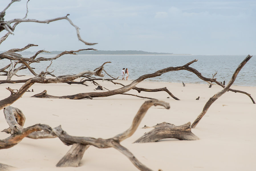 Boneyard beach Big talbot Island Jacksonville FL
