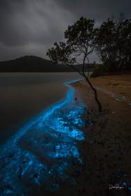 Bioluminescence, Tathra