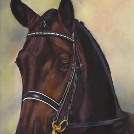 Dressuur paard