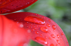 Red Droplet