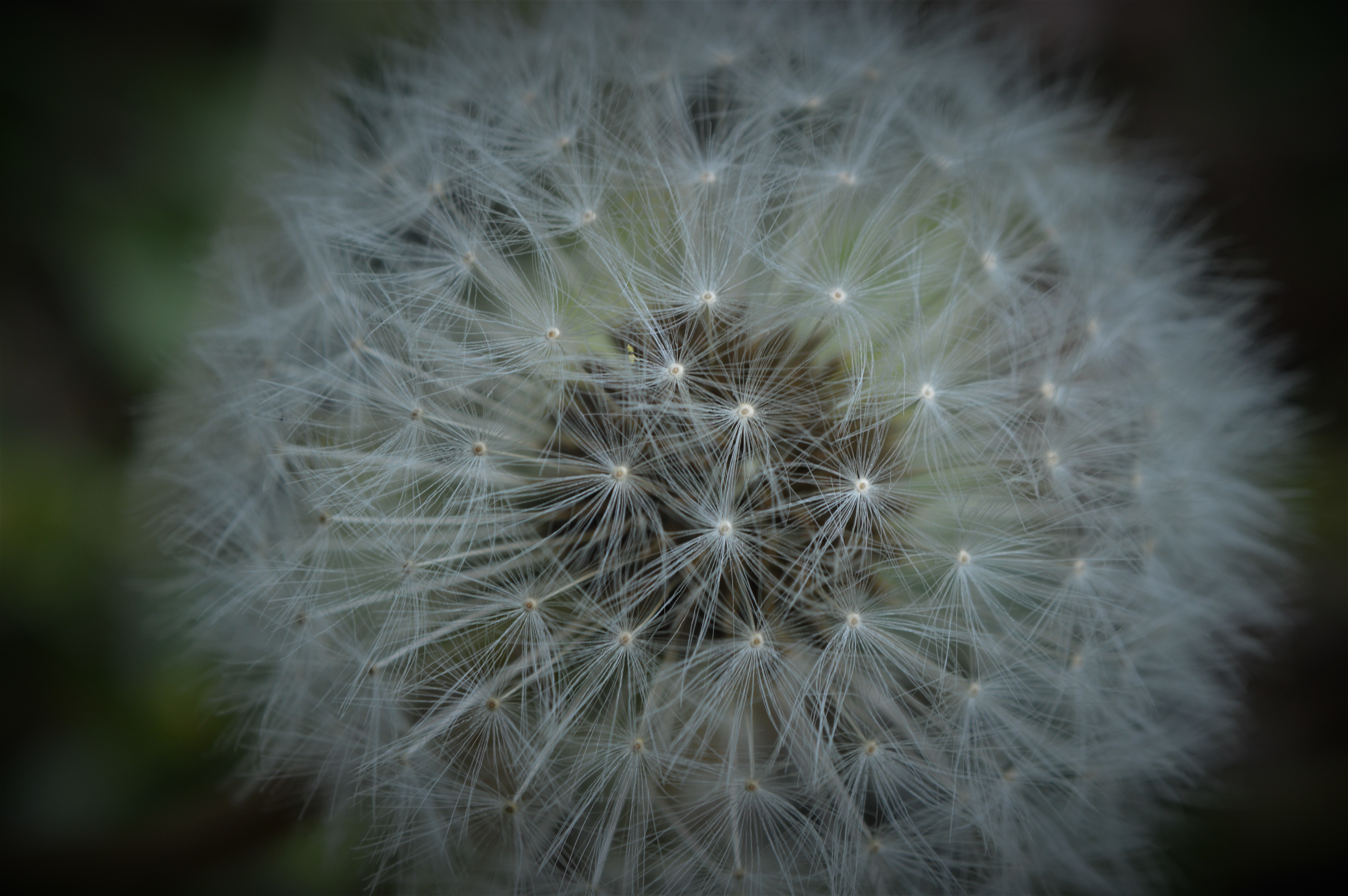 And a Dandelion II