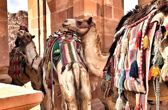Camels%20in%20Petra%202019_edited.jpg