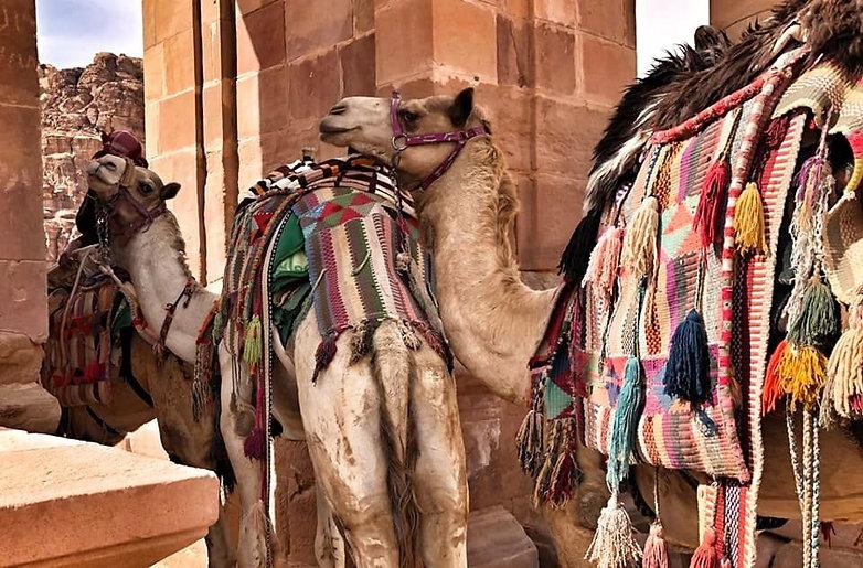 Camels in Petra 2019.jpg