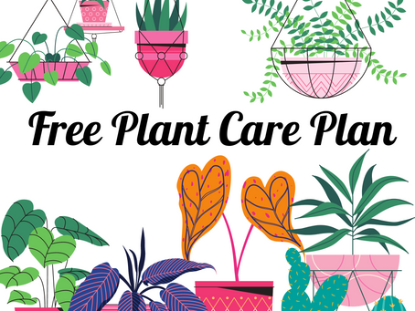 Having a Plant Care Plan