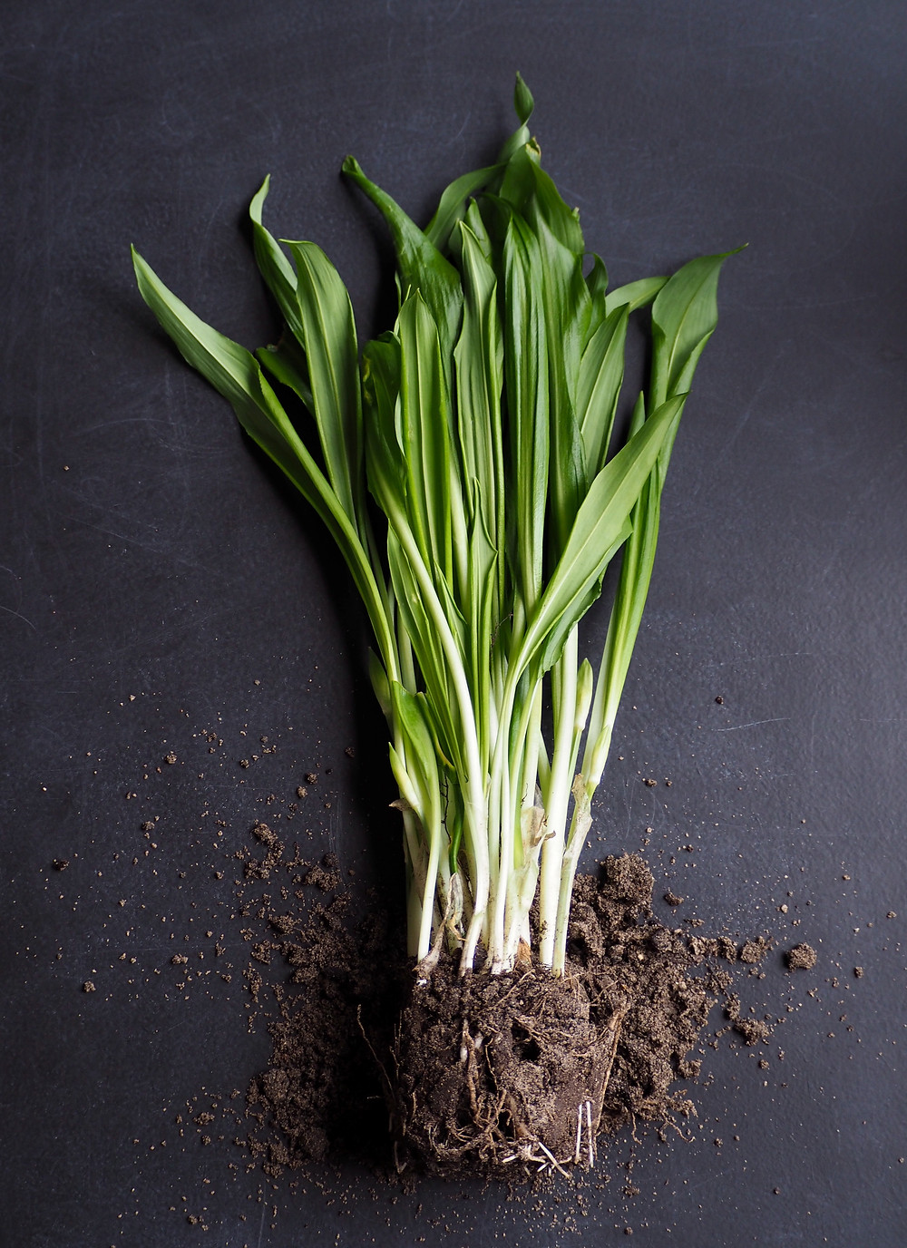 Leeks grown to full size. Photo by Anna Voss on Unsplash