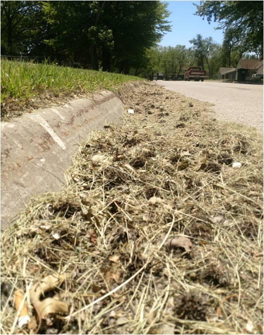 Grass in street