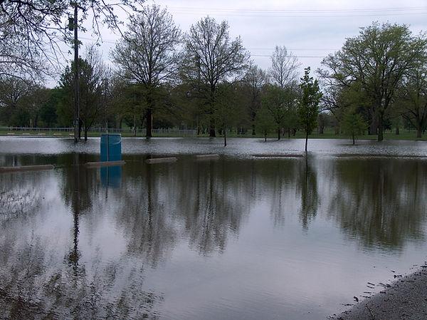 Flooded Forest Park