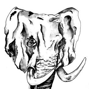Elephant, Elephatass