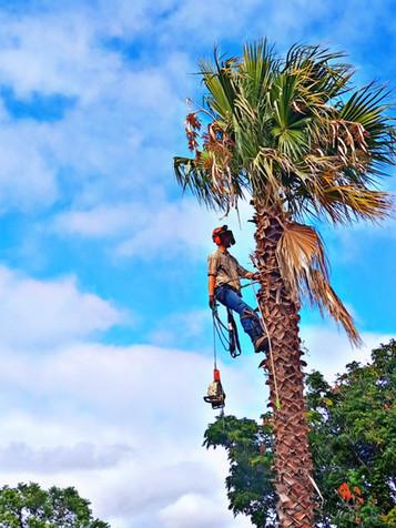 Andre Climbing 2