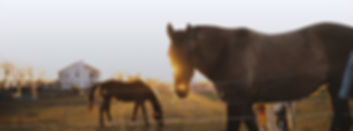 special needs, kids, PATH, therapeutic riding, horse therapy