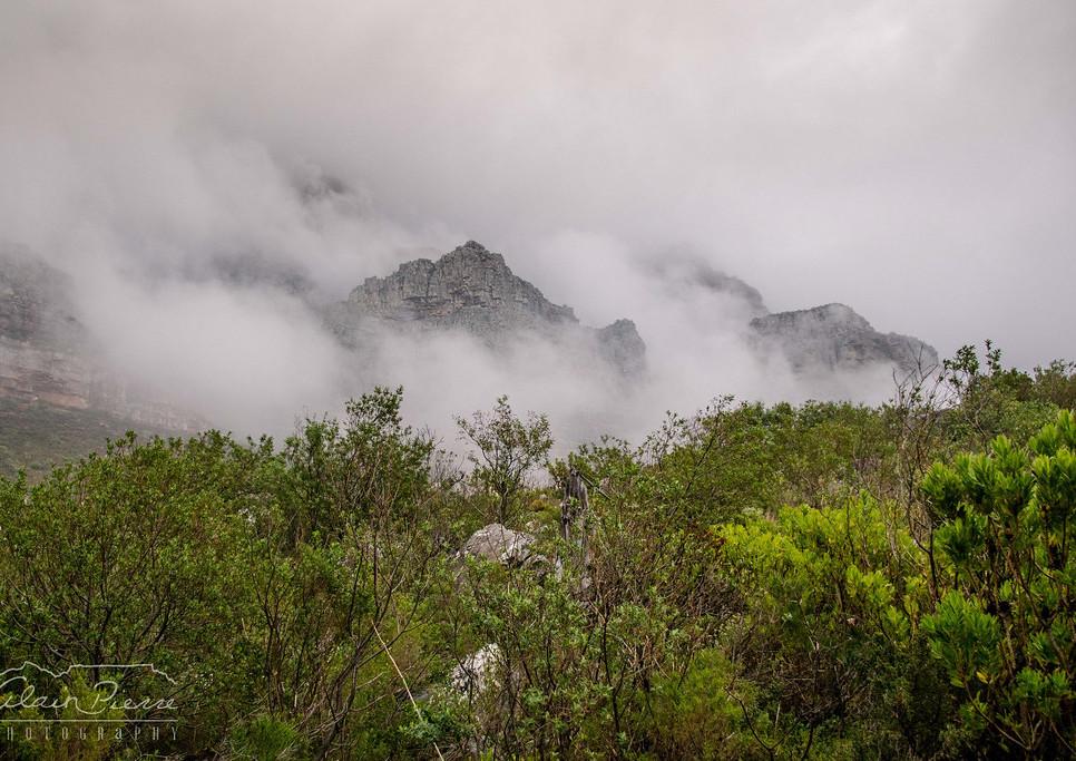 fynbos berg.jpg
