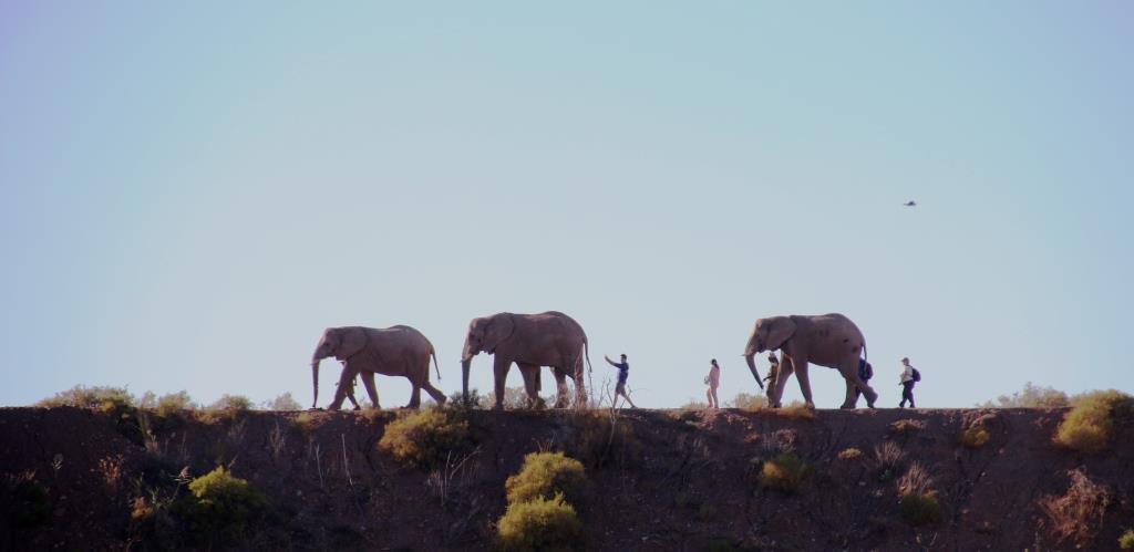 Buffelsdrift Elephant Walk