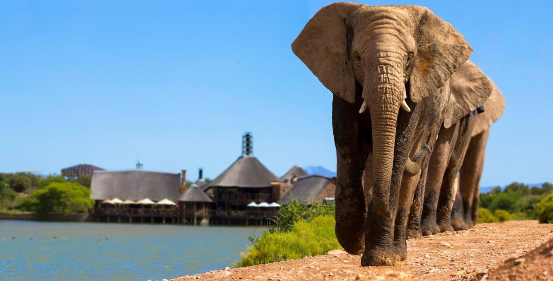 Buffelsdrift Elephants