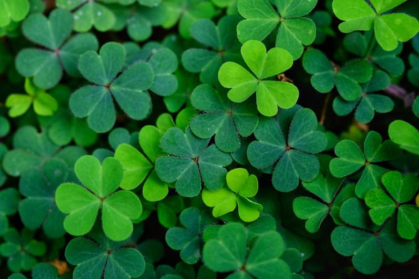 clover-leas-for-green-background-with-th